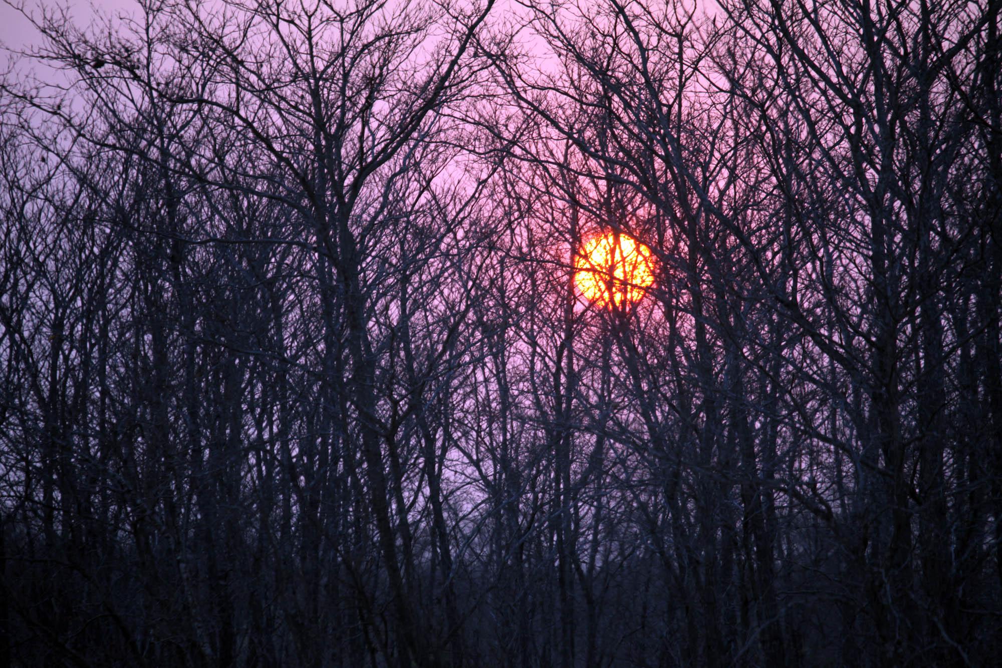 Sunrise at Ulusaba