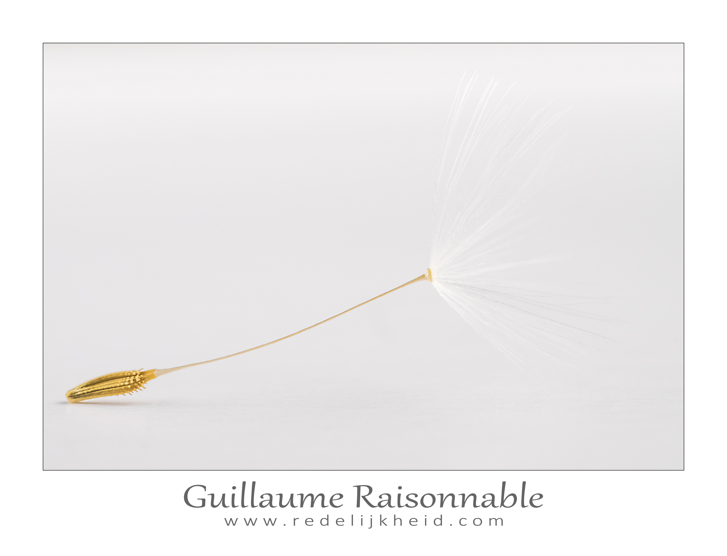 Dandelion seed against a white background