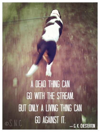 Sportweasel.com Jethro against the stream G.K. Chesterton.jpg