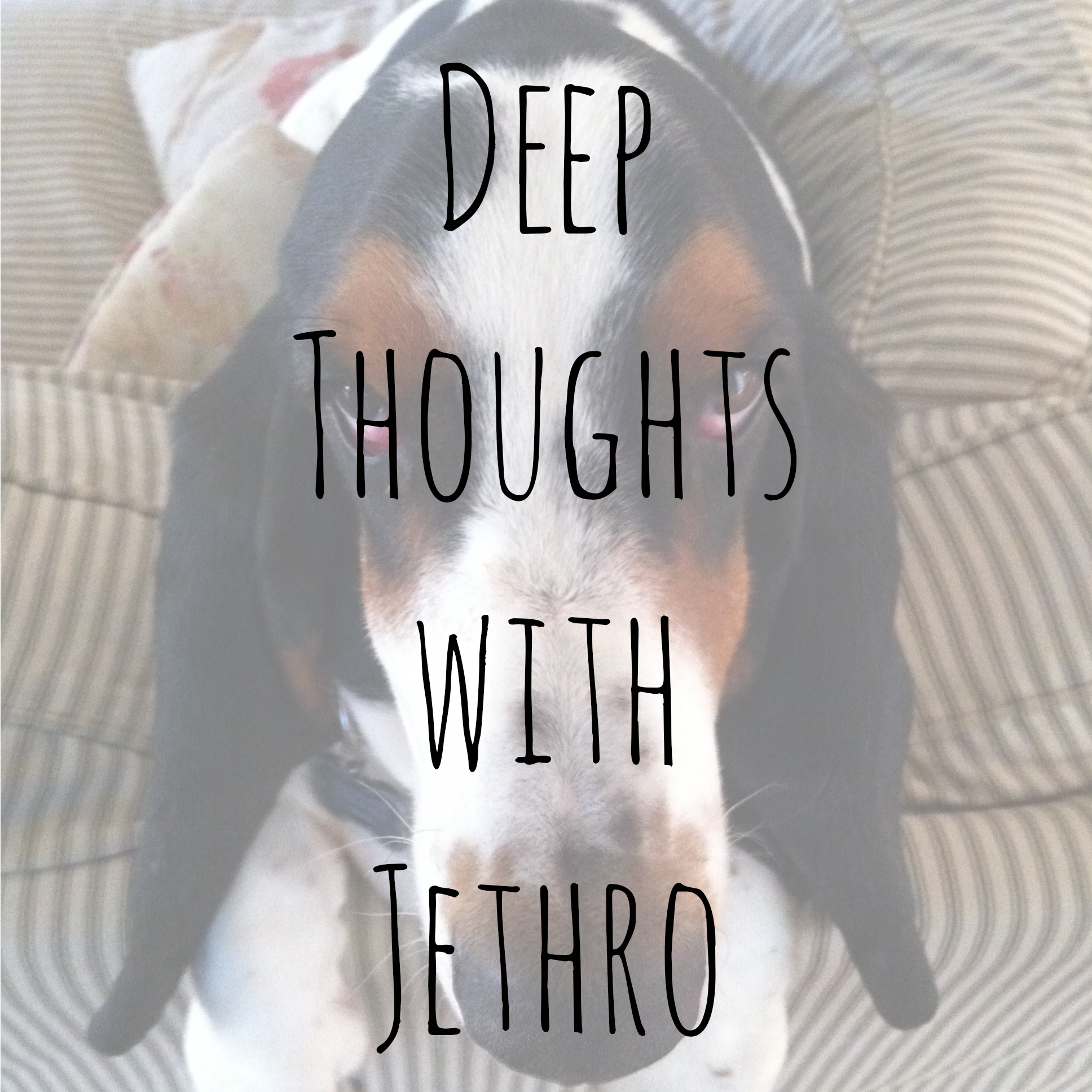 A collection of Jethro the basset hound's favorite quotes.
