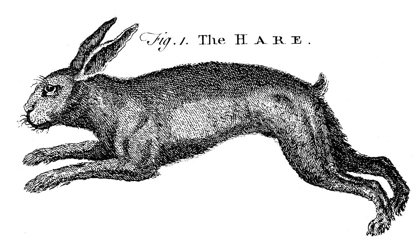 hare--graphicsfairy006bw.jpg