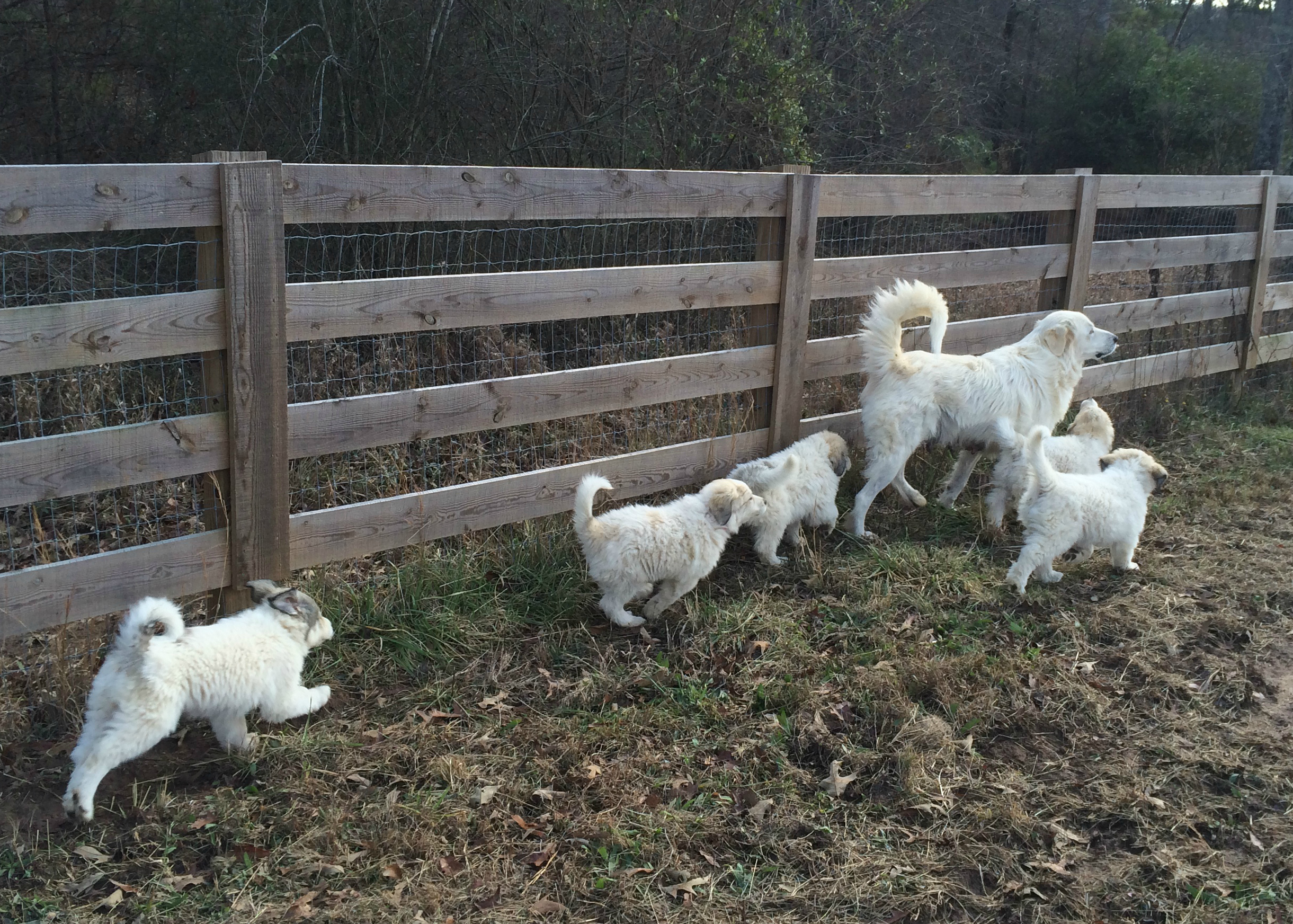 Fence line with Mom.jpg