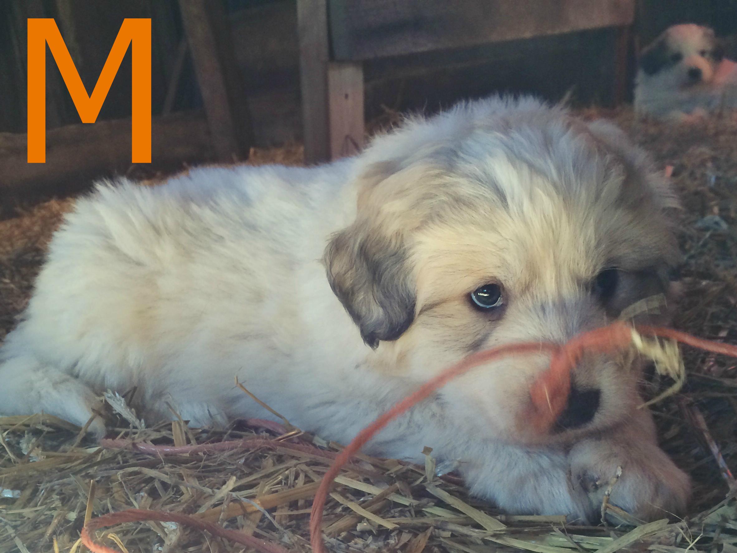 Orange Male at 5 weeks.jpg