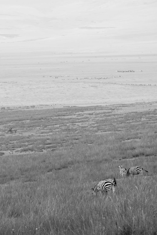 Maasai Herders
