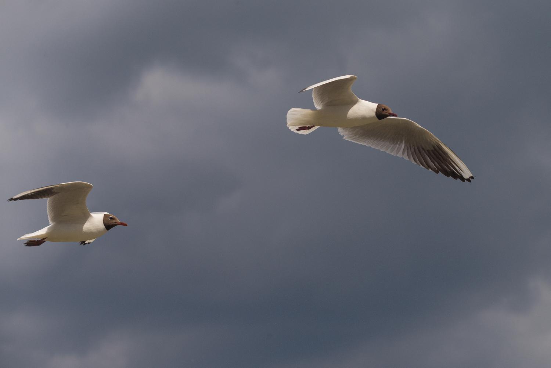 2 Birds