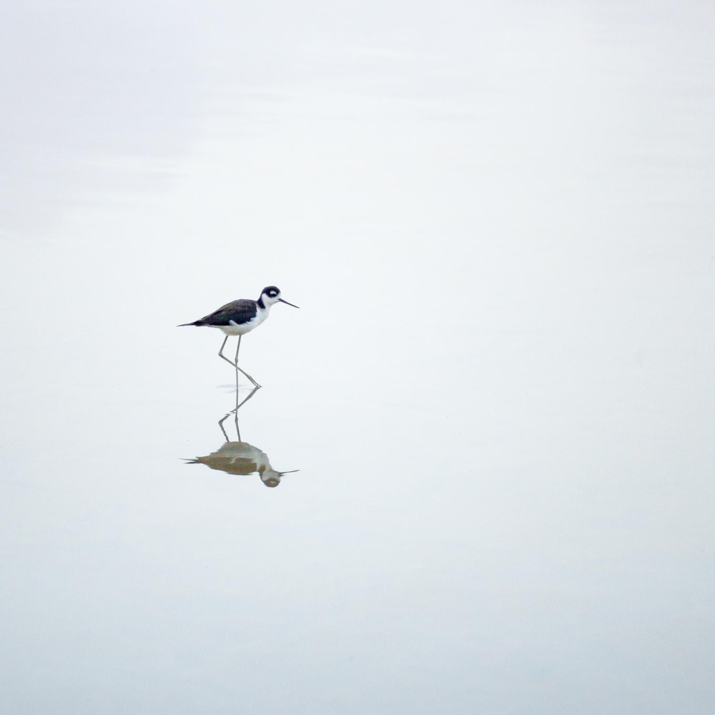 Bird at Santa Barbara Plantation