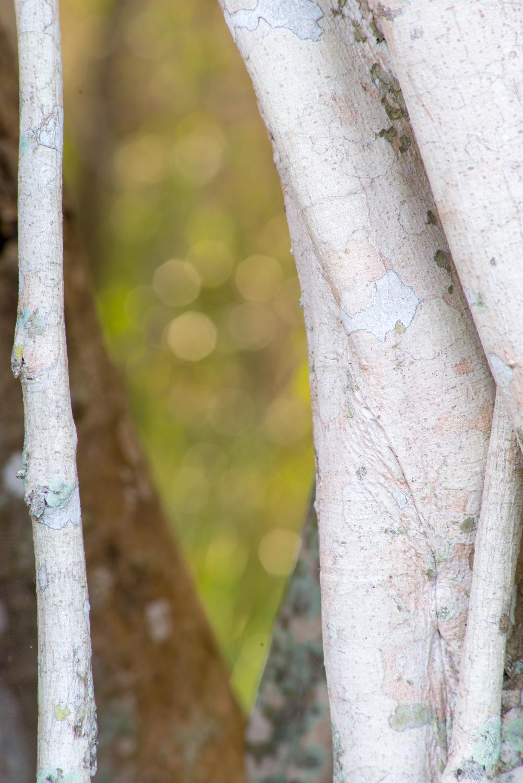 Tree on Anhinga Trail, Everglades