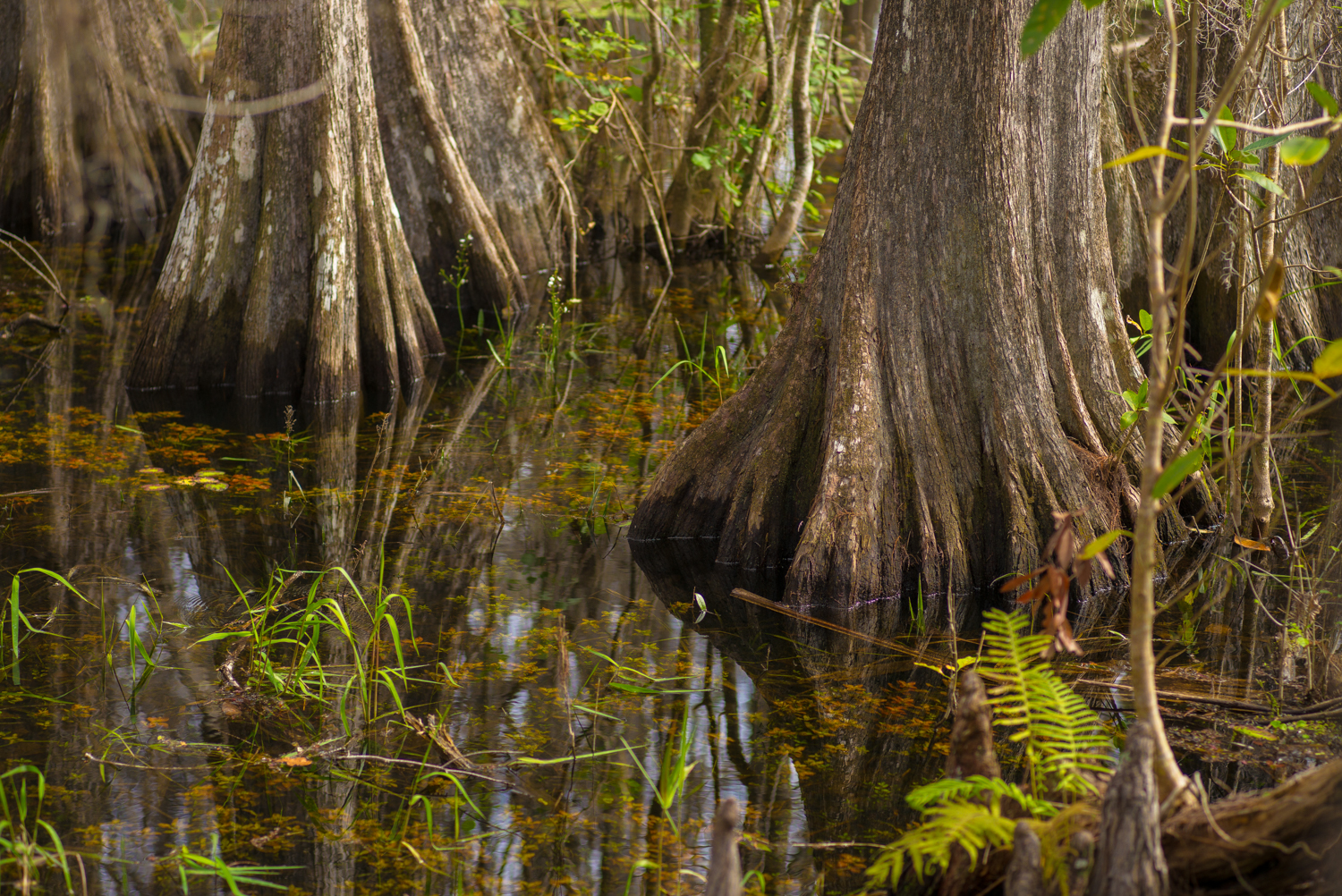 Big Cypress Park in the Everglades