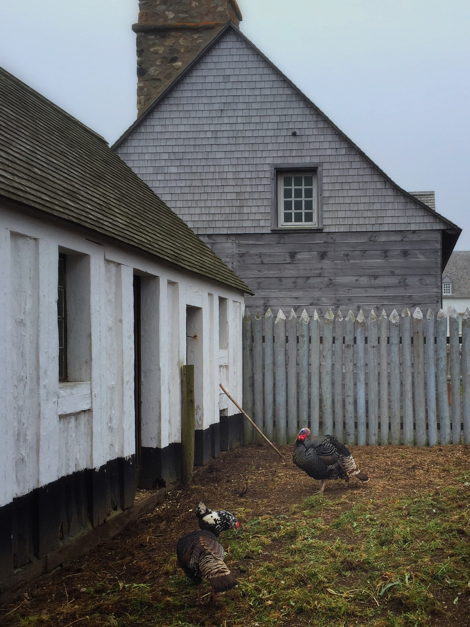 Chicken Farm in Louisbourg