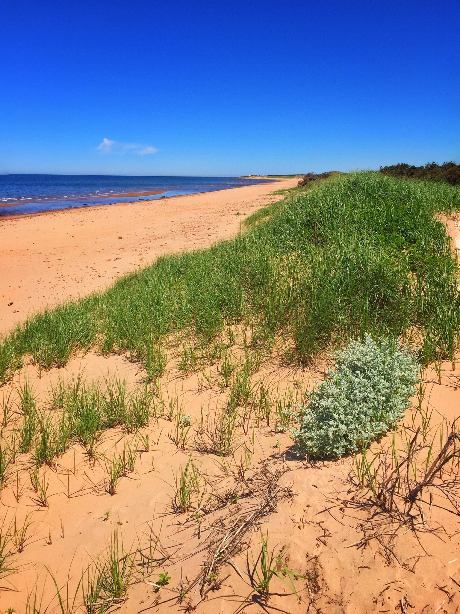 Beach at PEI National Park