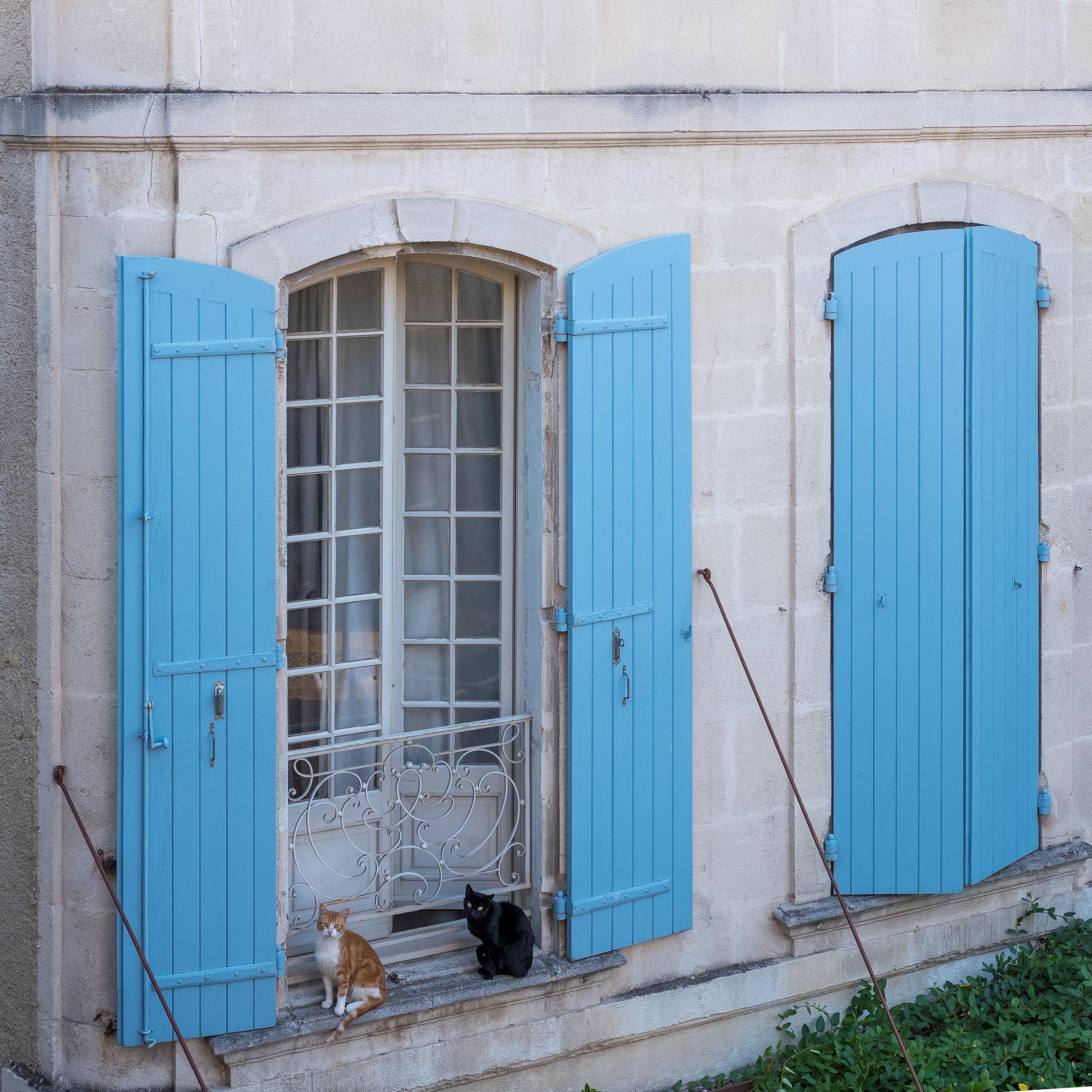 Cats, Saint-Rémy-de-Provence