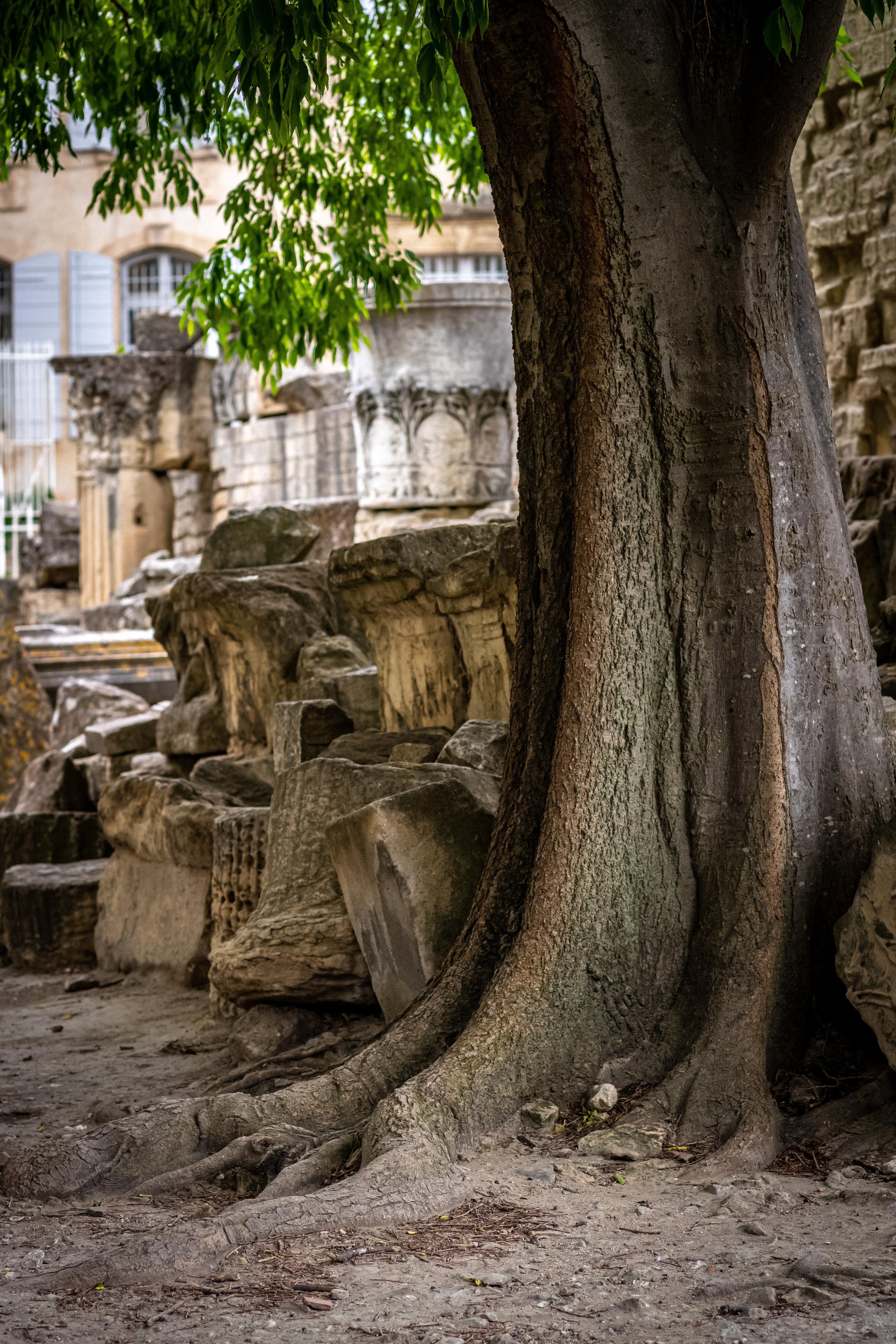 Tree, Roman Theatre, Arles, France