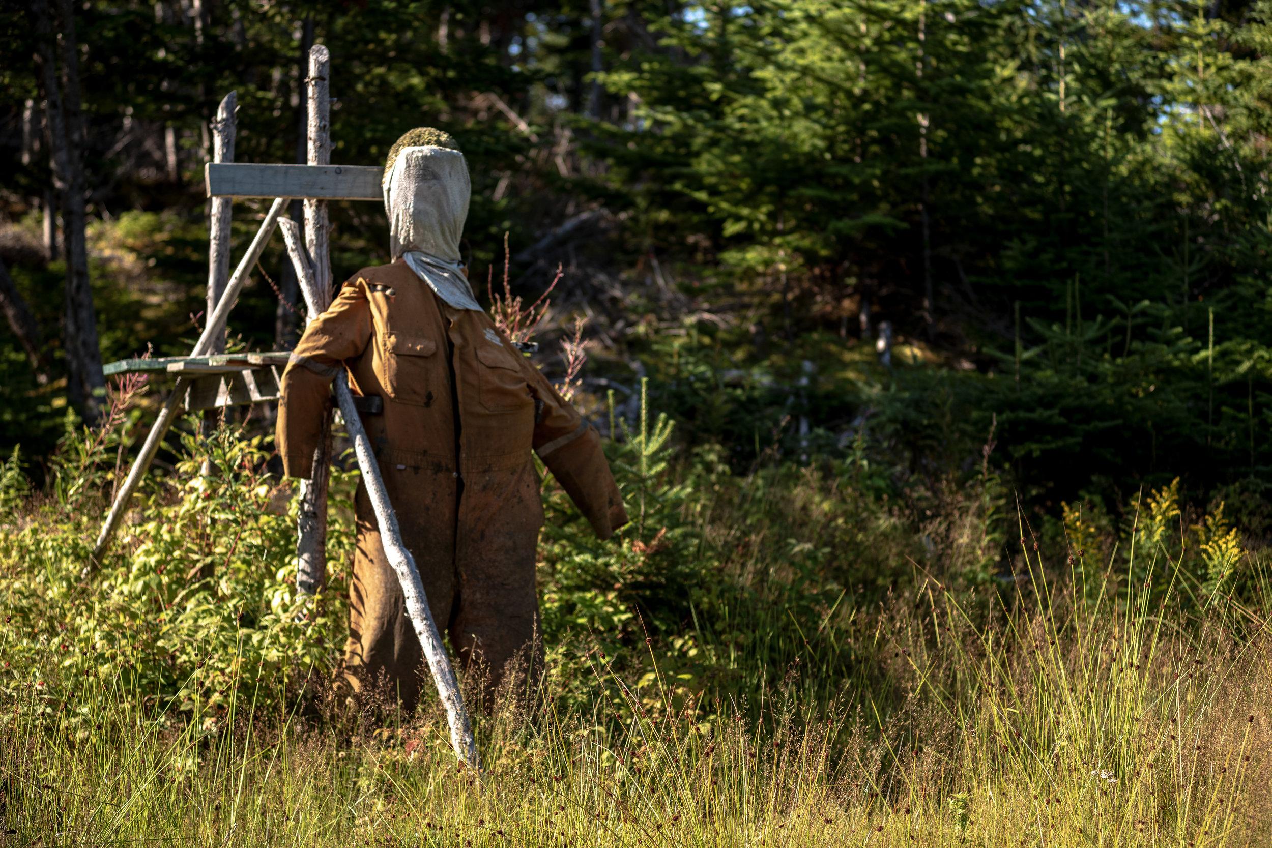 Scarecrow, Salt Harbour