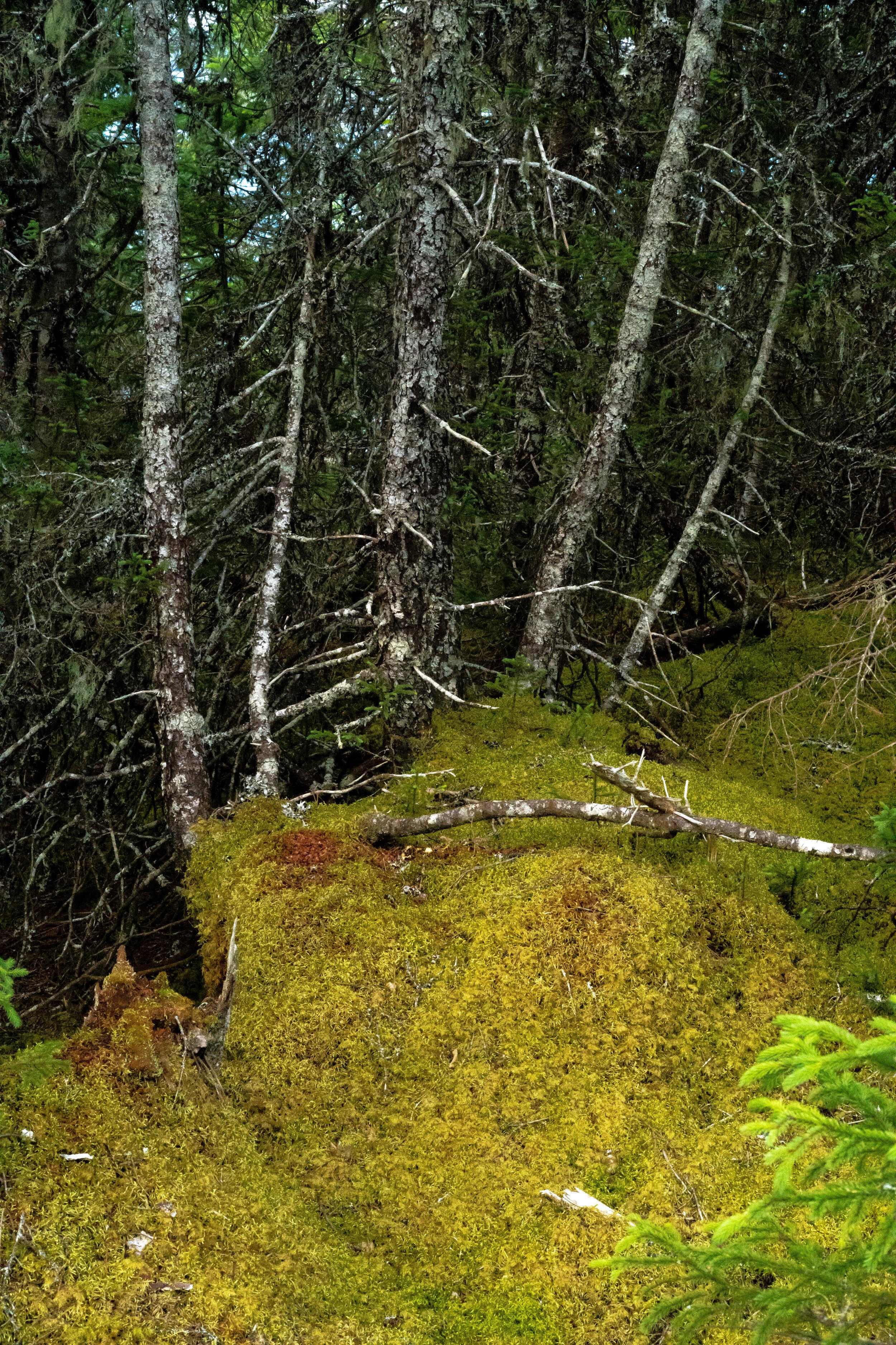 Dildo Run Provincial Park