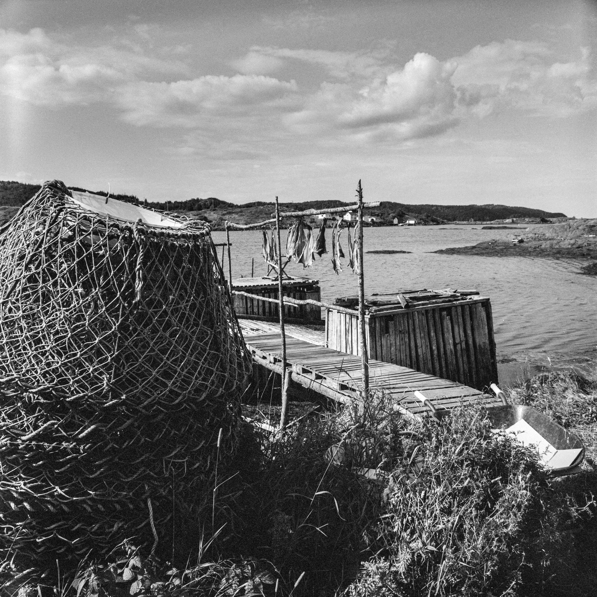 Drying Cod Fish, Toogood Arm, Newfoundland.