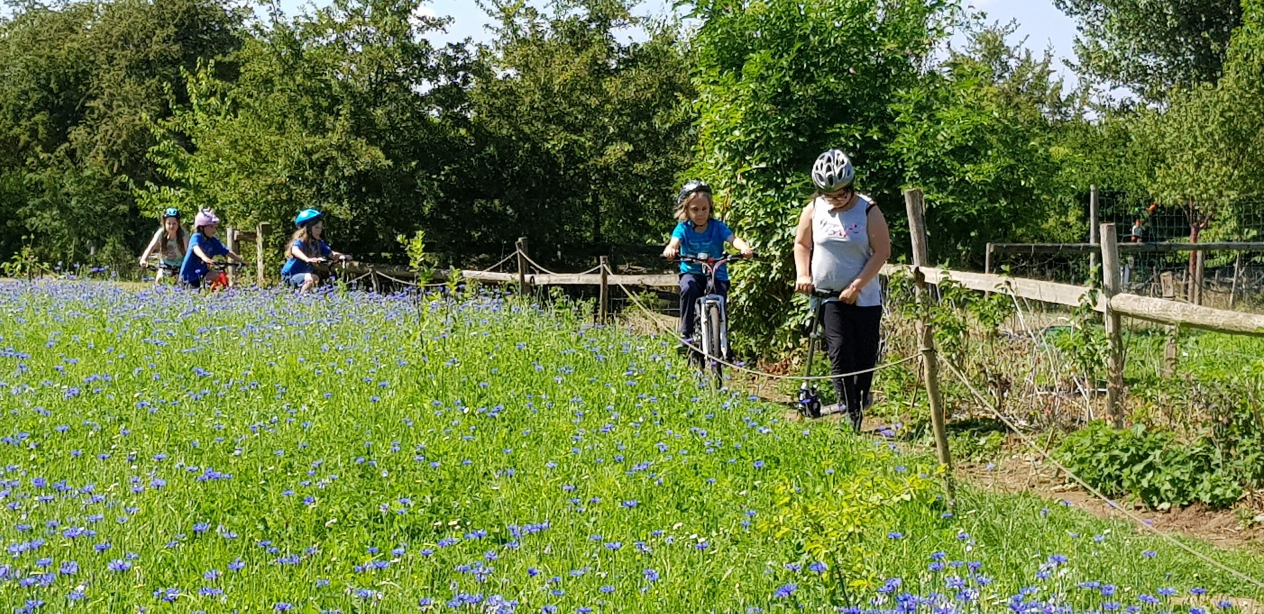 Bike riding in the wild flower meadows