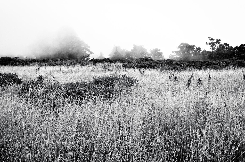 Foggy Meadow on Redwood Creek Trail | Mark Lindsay