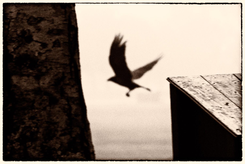 Bird of the Night   Mark Lindsay