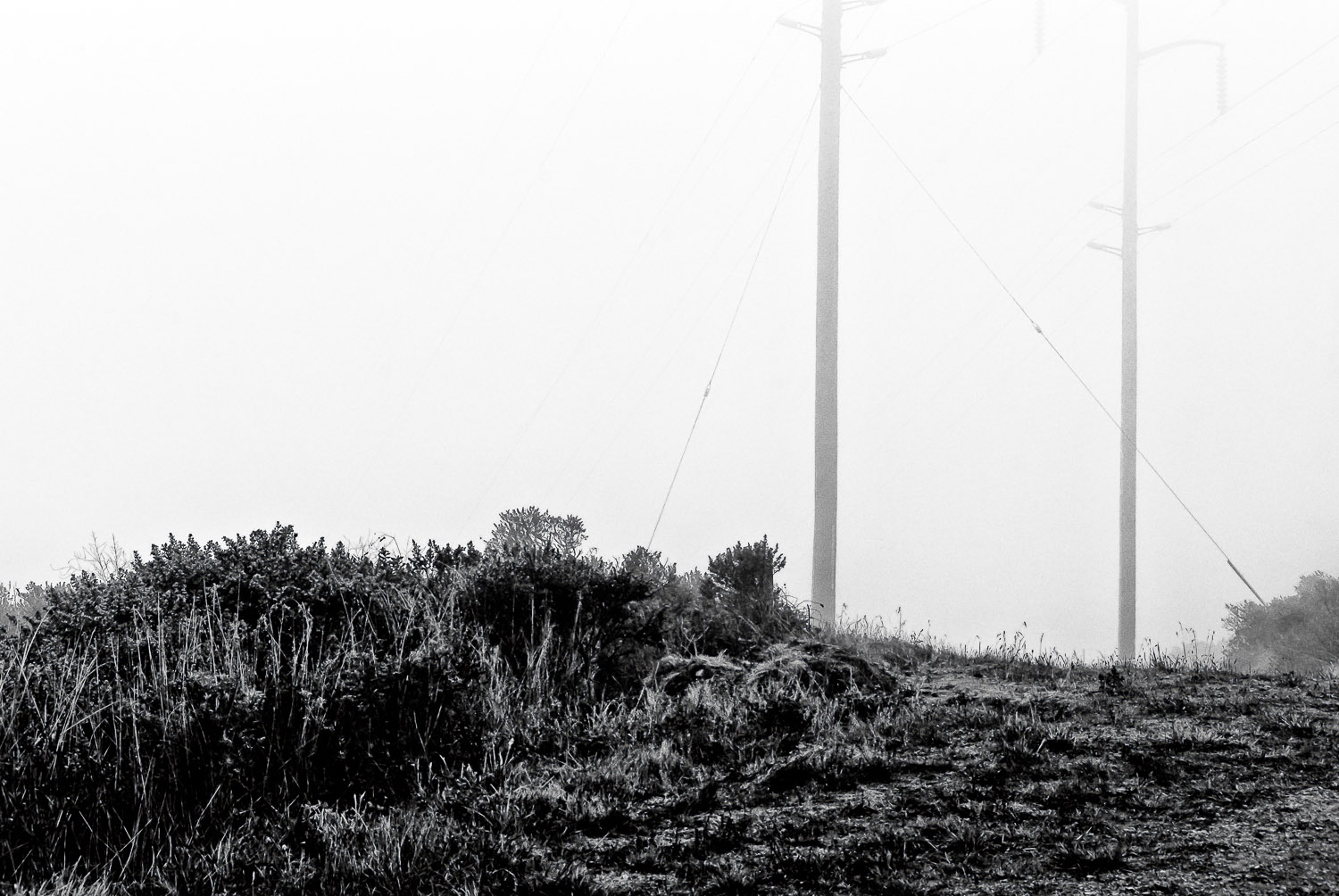 Fog with Utility Poles | Mark Lindsay