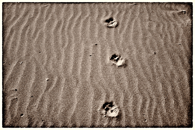 Muir Beach Haiku #6