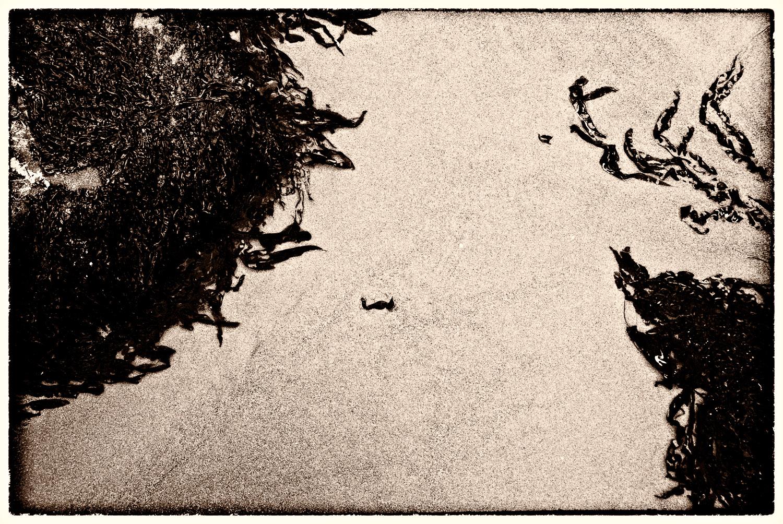 Muir Beach Haiku #9