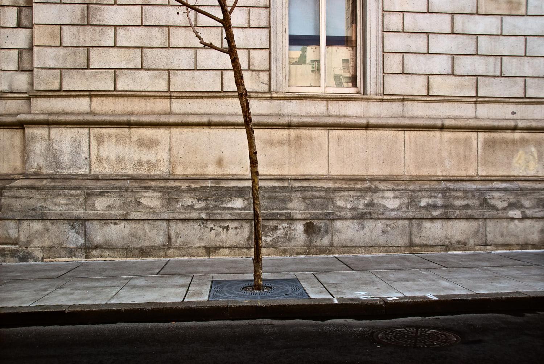 Tree on the Way Home | Mark Lindsay