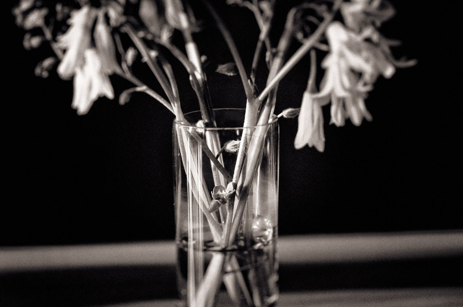 Wildflowers in a Glass | Mark Lindsay