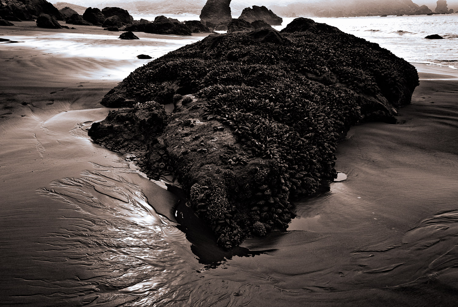 Mussel Rocks, Muir Beach | Mark LIndsay