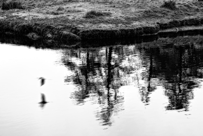 Spirit Bird with Reflection | Mark Lindsay