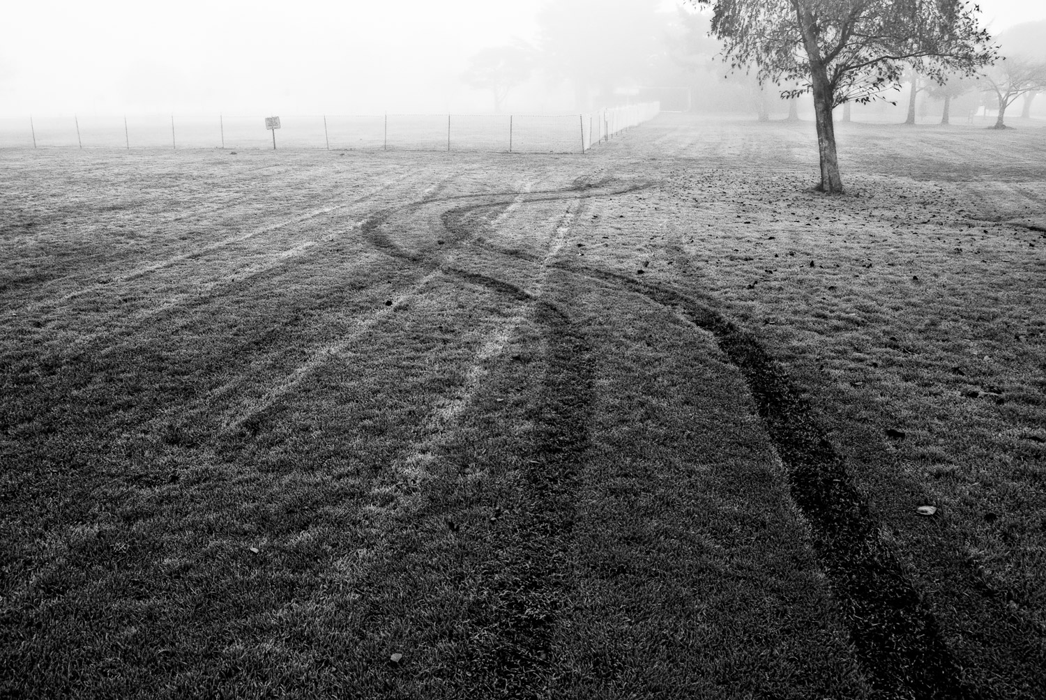 Don't Drive on the Grass   Mark Lindsay
