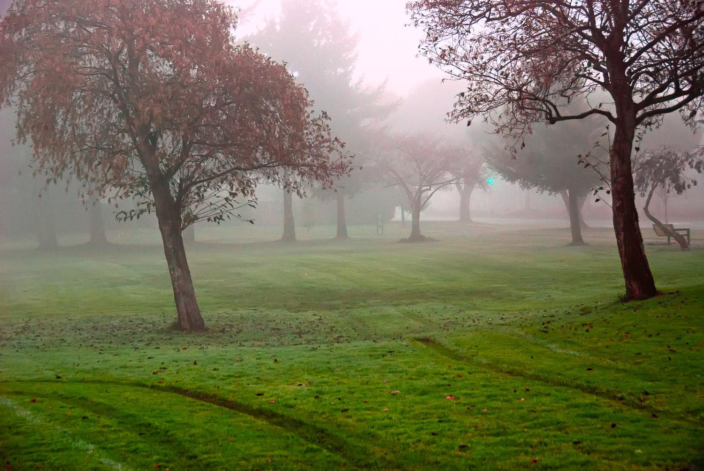 Traffic Signal in Fog | Mark Lindsay
