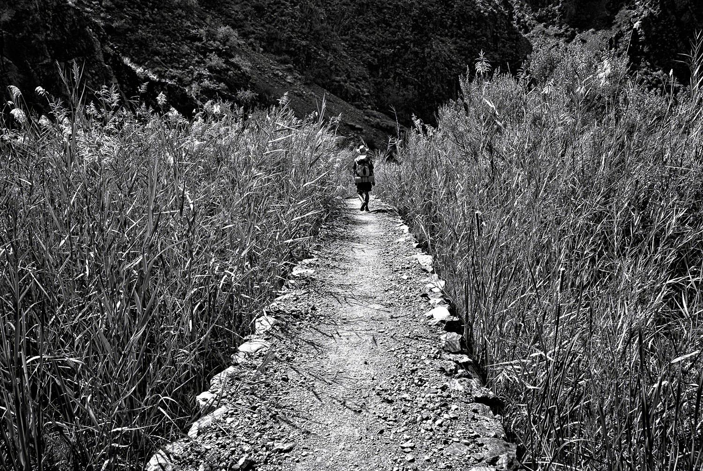 Hiker on the North Kaibab | Mark Lindsay