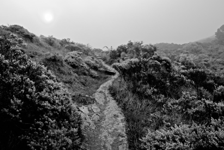 Summer Sun | Mark Lindsay