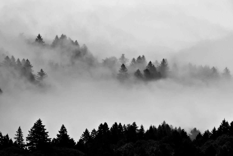 Trees in Fog, Mt. Tamalpais   Mark Lindsay