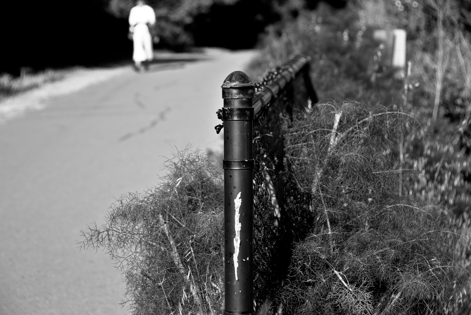 Fence Post and Passerby   Mark Lindsay