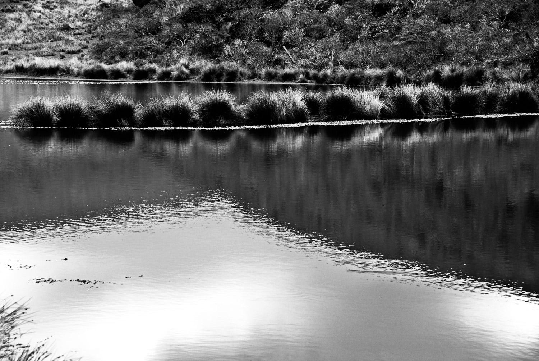 Reflections, Pt. Reyes | Mark Lindsay