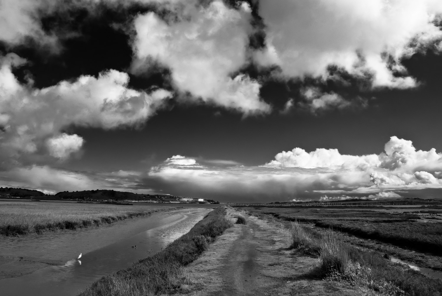 Marsh with Clouds and Egret   Mark Lindsay