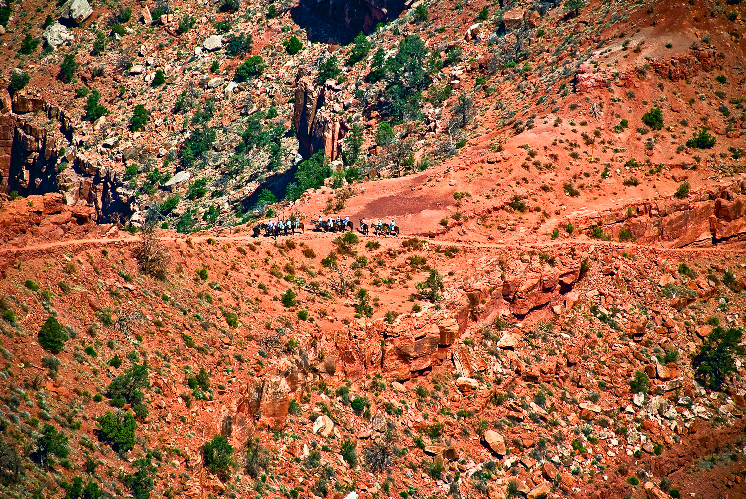 Distant Mule Train, Grand Canyon | Mark Lindsay