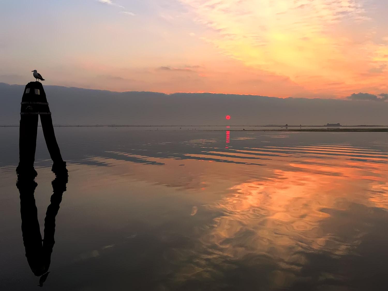 Bird at Sunset, Venetian Lagoon