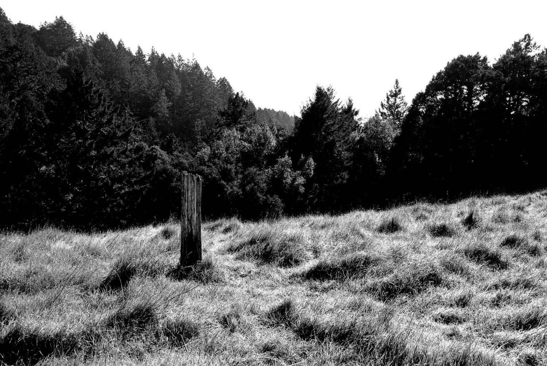 Mt. Tamalpais Meadow   Mark Lindsay