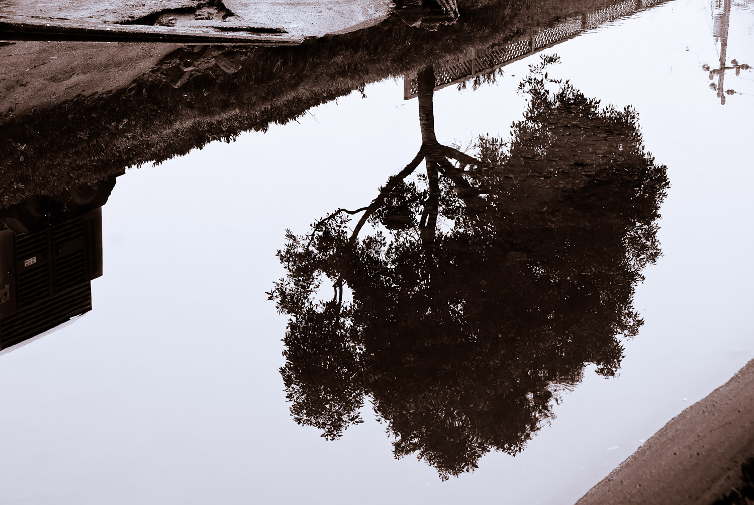 Tree Reflection in Brown | Mark Lindsay