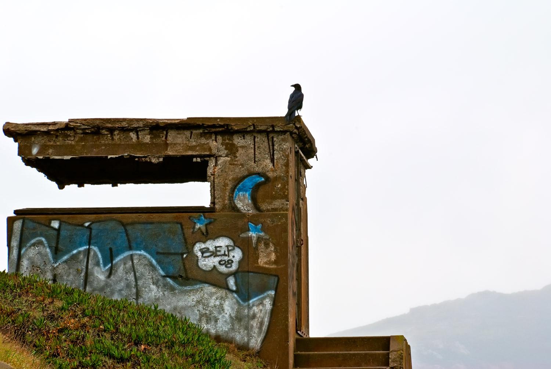 Crow on Bunker, Marin Headlands | Mark Lindsay