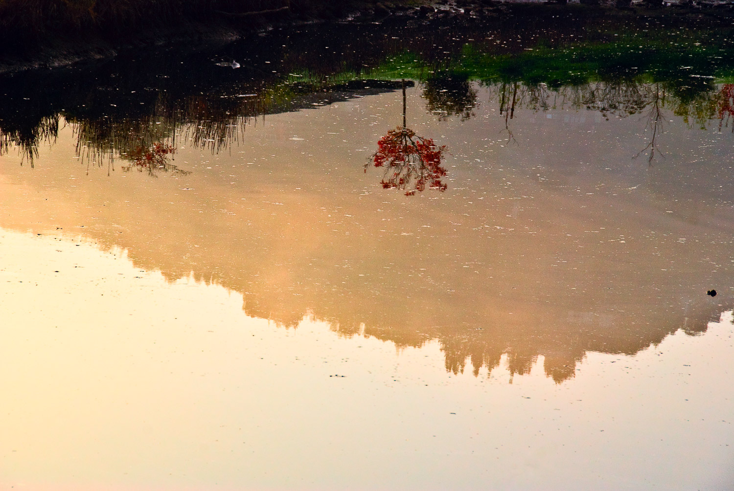 Red Tree in Reflection | Mark Lindsay