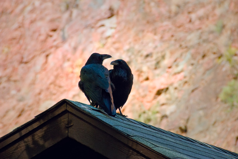 Two Ravens, Phantom Ranch | Mark Lindsay