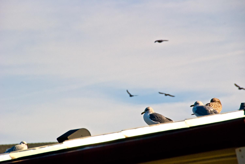 Bird Frenzy, Corte Madera | Mark Lindsay