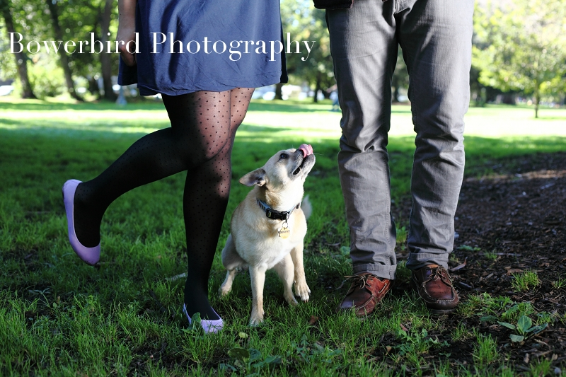 Iggy and his peeps!© Bowerbird Photography 2012; Engagement Photography at the Panhandle, San Francisco.