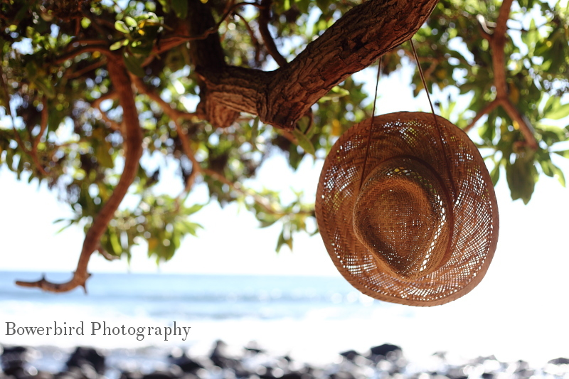 My straw hat hangs in a tree overlooking the ocean. © Bowerbird Photography 2012; Straw hat, Kauai, Hawaii