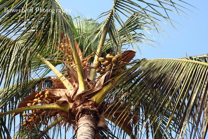 Our shade friends.© Bowerbird Photography 2012; Travel Photography Kauai, Hawaii.