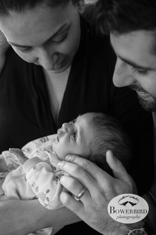 Such a happy family! ©  Bowerbird Photography 2012; Newborn Photography in Albany.