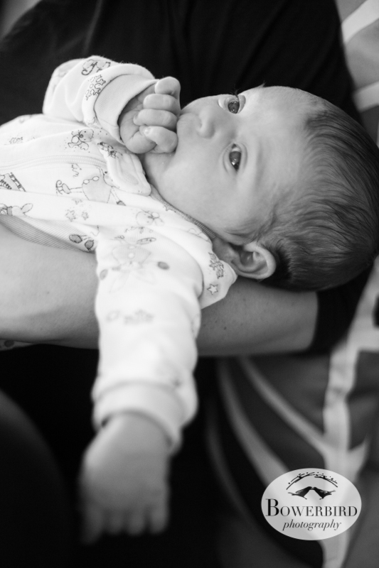 Pro hand munching! ©  Bowerbird Photography 2012; Newborn Photography in Albany.
